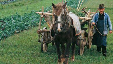 Bauer mit Pferd