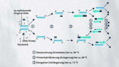 PCR-Grafik