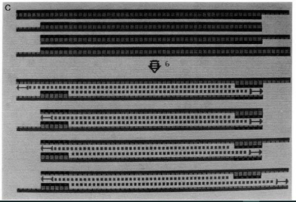 PCR-Kary-Mullis-03