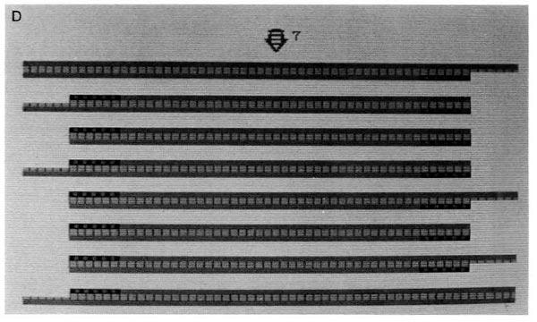 PCR-Kary-Mullis-04