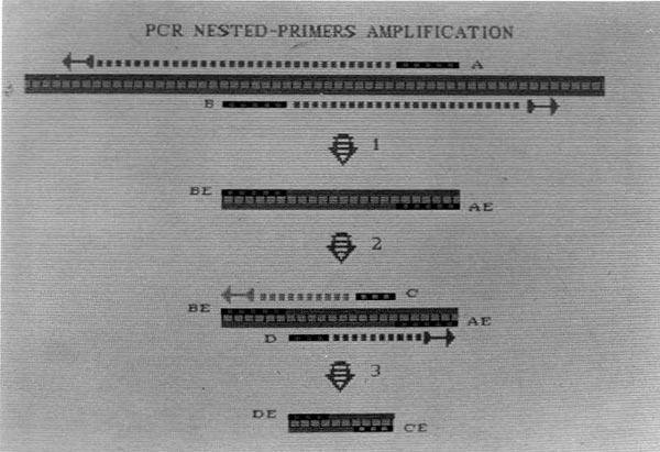 PCR-Kary-Mullis-05