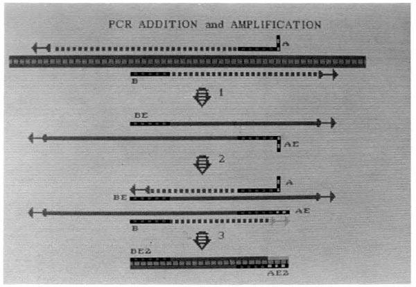 PCR-Kary-Mullis-06