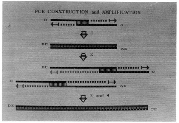 PCR-Kary-Mullis-07