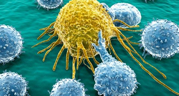 T-Zellen
