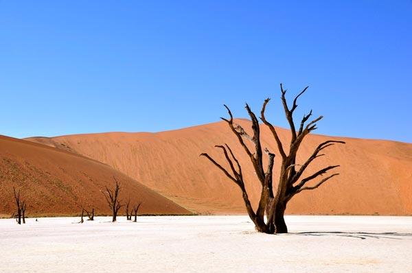 Baum in der Wueste