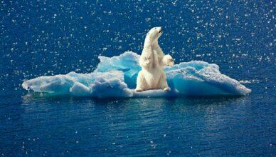 Eisbaer auf Eisscholle