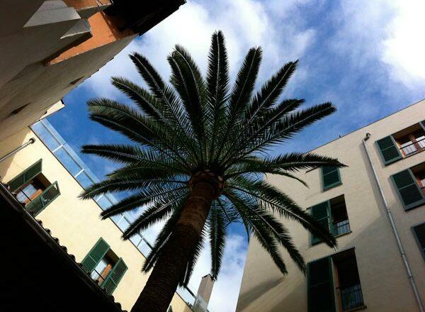 Palme im Innenhof